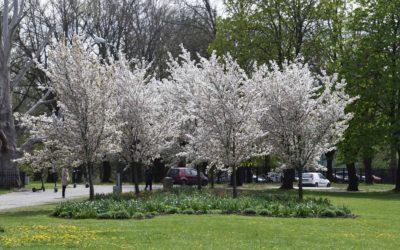Uzvaras parks Rīgā 8. maijs 2020